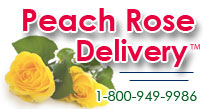 Peach Rose Delivery