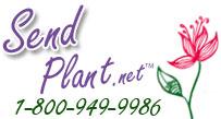 Send Plant